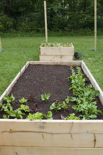raised garden bed photo