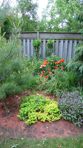 backyard garden photo