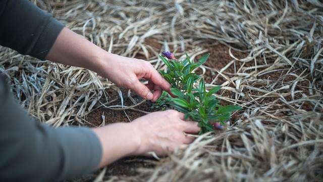Newbie Gardener Tips