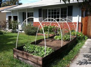 Build A Cheap Raised Garden Bed in Under an Hour