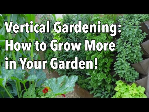 Vertical Gardening – Simple Ideas for a Balcony Garden