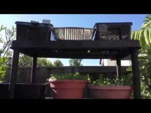 Vertical Gardening Made Easy – More Small Garden Ideas