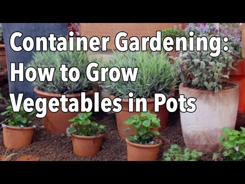 Container Gardening – Vegetables as Balcony Plants