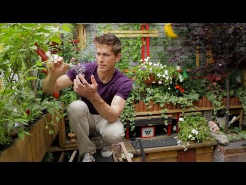 Tiny Gardens Are Bountiful – Grow Your Own Balcony Garden