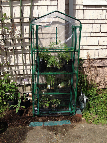 mini greenhouses are an integral part of any garden infrastructure plan that yields enormous results