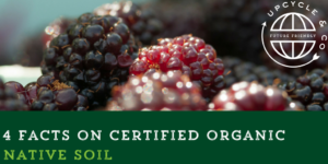 4 Facts You May Not Know about Certified Organic