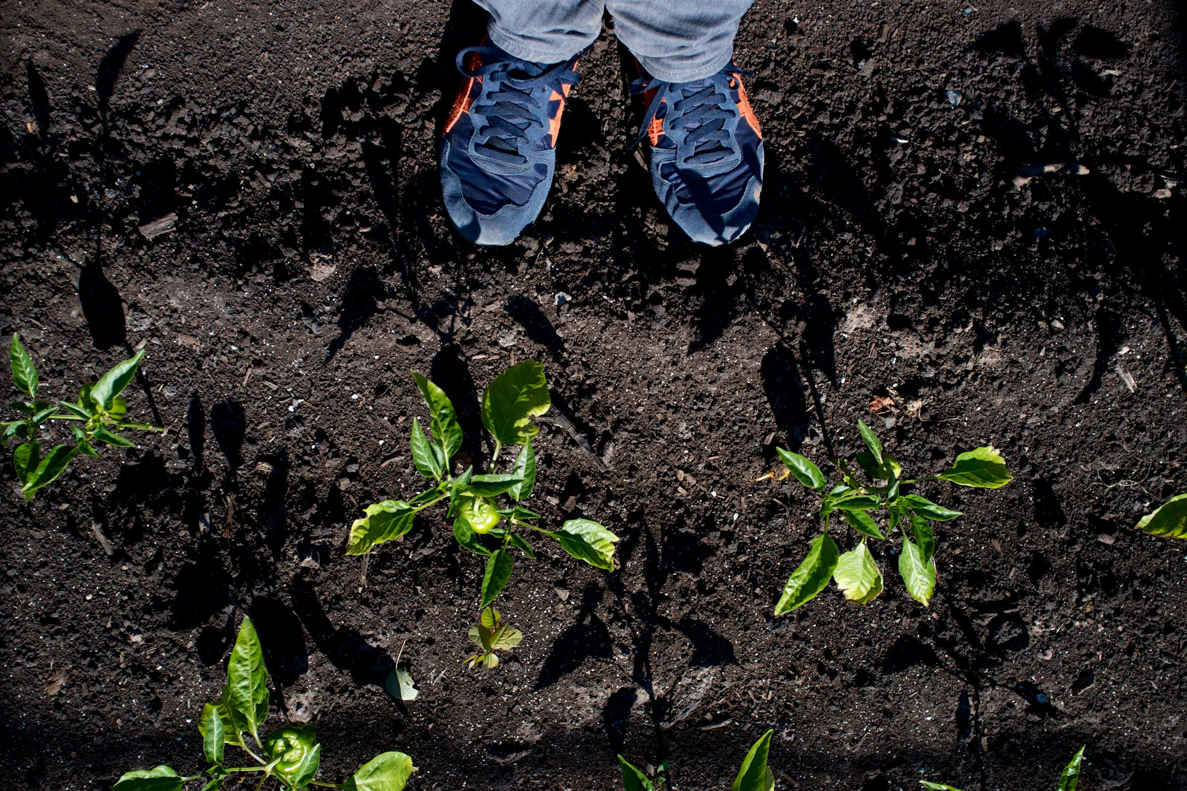 photograph looking down at feet in the dirt with peppers growing