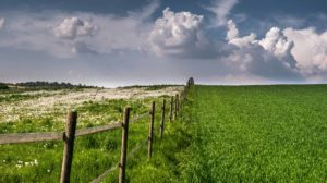 photograph of a fertile field with a fence bisecting it